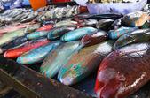 Parrot fish at phuket — Stock Photo