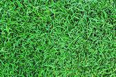 Textura de fondo verde hierba. — Foto de Stock