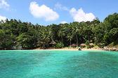 Palms on tropical coastline on caribbean sea, Island — Stock Photo