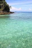 カリブ海の熱帯海岸線にヤシの木の島します。 — ストック写真