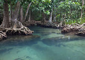 Mangrove forests ( swamp ) with river — Stock Photo