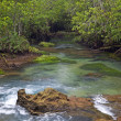 Stock Photo: Mangrove forests ( swamp ) with river