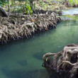 Mangrove forests ( swamp ) with river — Stockfoto