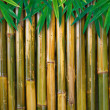 Bamboo background with leaves — Stock Photo