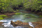 Mangrove forests ( swamp ) with river — Stok fotoğraf