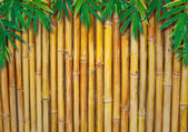 Background Texture Of A Bamboo Fence with bamboo-leaves — Stock Photo