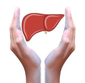 Liver in hand — Stock Photo