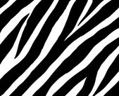 Zebra background — Stock Photo