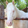 White horse — Stock Photo #29633293
