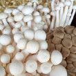 Close up of an assortment of mushrooms — Stock Photo