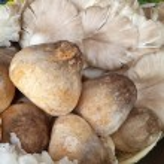 Close up of an assortment of mushrooms — Stock Photo