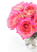 Pink rose on white background — Stock Photo
