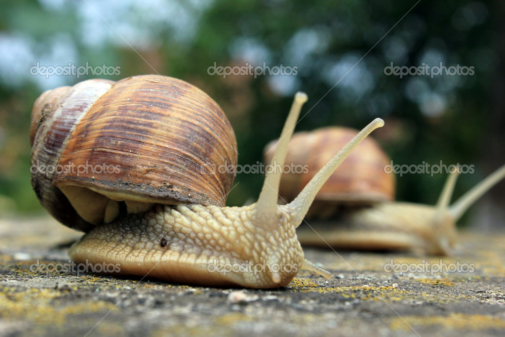 Two snails on the rock — Stock Photo #12196527