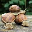 Royalty-Free Stock Photo: Riding with snails