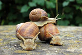 Riding with snails — Stok fotoğraf
