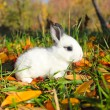 Stock Photo: Little bunny