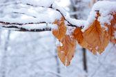 Frozen leafs — Stock Photo