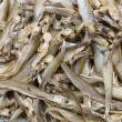 Dried  Whisker Sheatfish use as background — Stock Photo