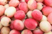 Indiska gemensamma ört koromcha - karonda eller carissa carandas använda som — Stockfoto