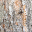Bark of Elm. trunk of tree ,Seamless Tileable background Texture — Stock Photo