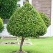 Green tree bush shape — Stock Photo