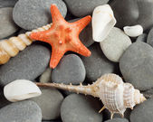 Background to marine mollusks and the star — Stock Photo