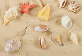Background with colored shells and starfish — Stock Photo