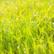 Stock Photo: Bright green luscious grass with drops