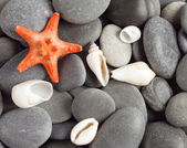 Orange five-pointed starfish — Stock Photo