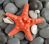 Orange sea star — Stock Photo