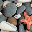 Starfish with shells - Stock Photo