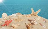 ヒトデと貝殻、砂のビーチ — ストック写真