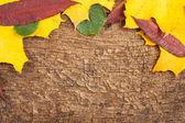 Fond fissuré du vieux bois — Photo