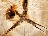 Taglio di un albero — Foto Stock