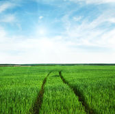 Country road in green field — Stock Photo