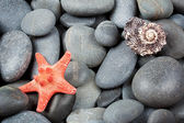 Background of pebbles with starfish — Stock Photo