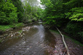 Delaware River Tributary — Stock Photo