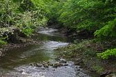 Delaware River Tributary — Stock Photo