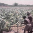 Workers tending to crops in Africa — Stock Video