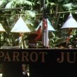 Trained parrot raising Americflag — Stock Video #26624887