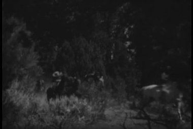 Native Americans on horseback riding through forest — Stock Video