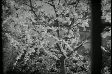 Effectuer un zoom arrière arbre fleurissant à travers la fenêtre de la prison de cellule de prison — Vidéo