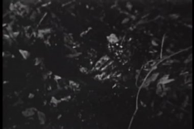 泥沼に溺れ手のクローズ アップ — ストックビデオ
