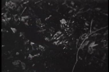Detail ruky se topí v bažině — Stock video