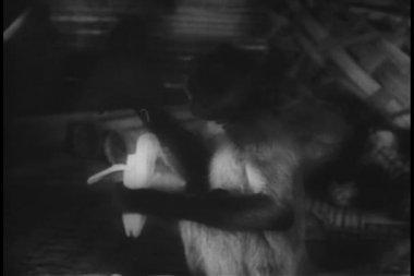 Mono comiendo plátano — Vídeo de stock