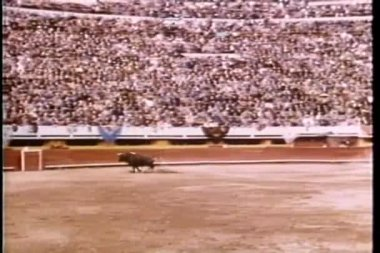 Wide shot of bull running around empty bullfighting ring — Stock Video