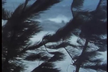 Coastal trees blowing under strong wind — Wideo stockowe