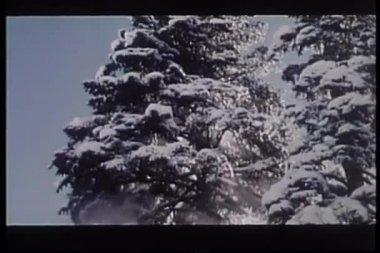 Dragen klimmen op sneeuw beladen fir tree — Stockvideo