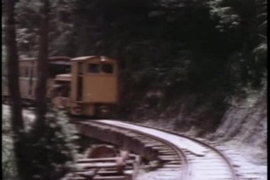 Small train traveling through wooded area — Stock Video