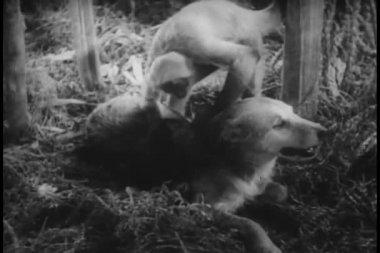 Monkey examining dog's fur — Stock Video